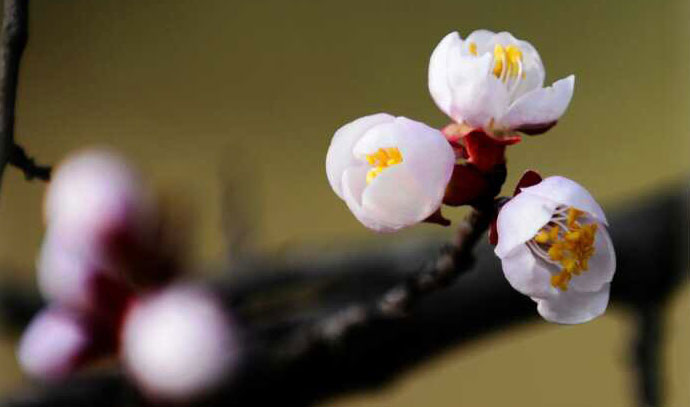 春天来了,送你一片春暖花开