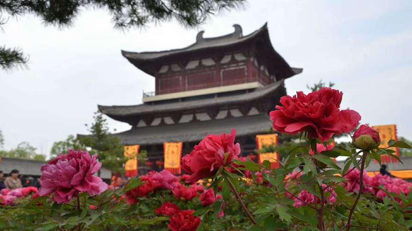 牡丹花·黎都公园